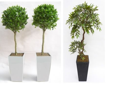 Decorative Trees for hire